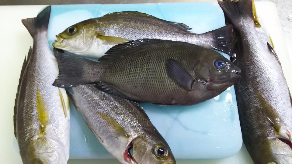 その他の魚たちブログ